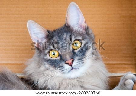Grey cat closeup - stock photo