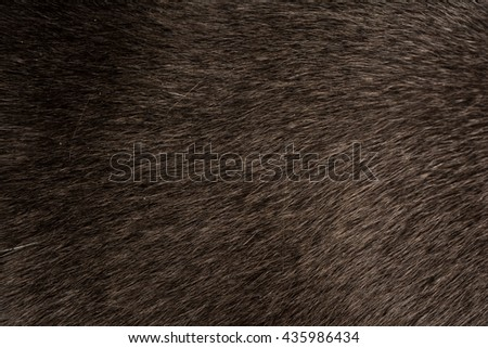 Grey Cat Fur closeup - stock photo