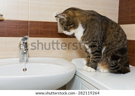 Grey cat interes water from the faucet in the sink - stock photo