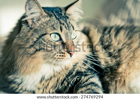 Grey cat lying on bed  - stock photo