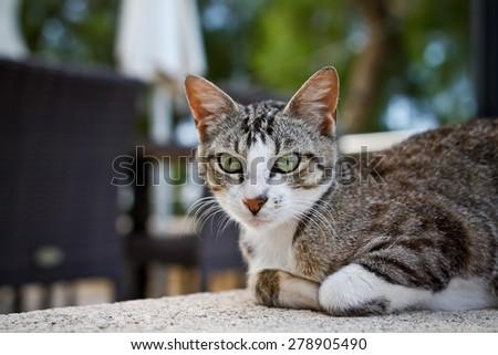 Grey cat lying on wall  - stock photo