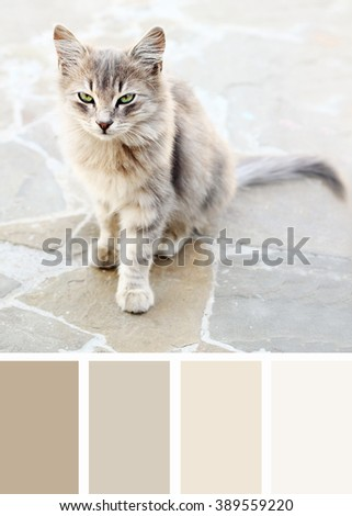 Grey cat on the street. Color palette swatches. - stock photo
