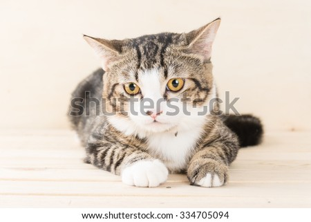grey cat on wood background