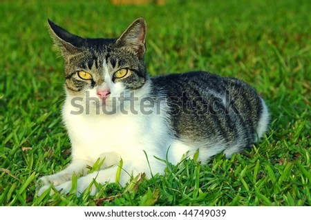 Grey Cat Sitting On A Green Field - stock photo