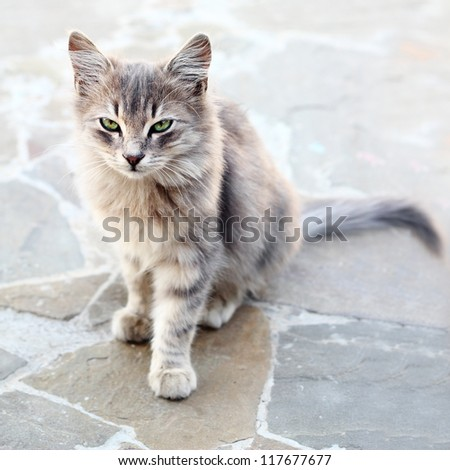 Grey cat sitting on stone floor