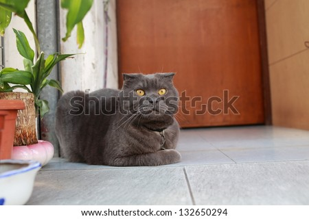 grey cat sleepy but watching by yellow eyes - stock photo