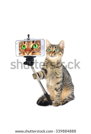 grey cat taking a selfie together with smartphone camera on a white background - stock photo