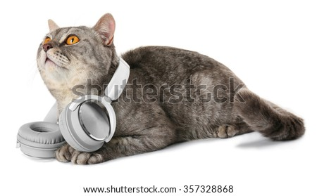 Grey cat with headphones isolated on white background - stock photo