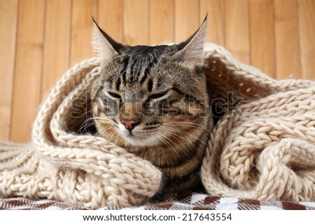 Grey cat wrapped in knitted scarf on wooden wall background - stock photo