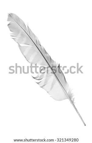 grey falcon feather isolated on white background