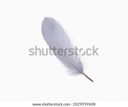Grey feather on a white background