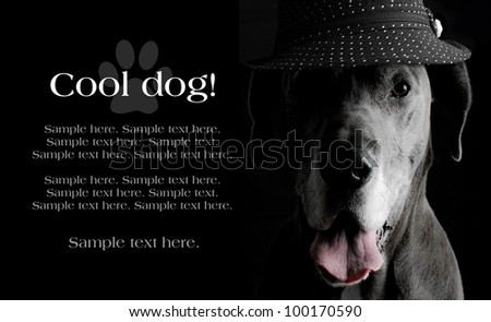 Grey Great Dane Dog wearing a hat in an artistic light setting with text space to the left - stock photo