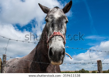 Grey head of horse closely in the meadow.  - stock photo