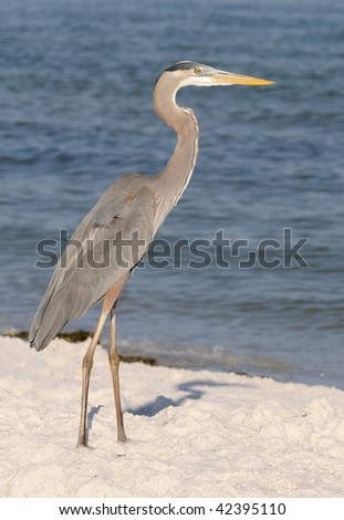 Grey heron on sandy beach - stock photo