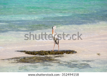 Grey heron staying on the shore near by water.