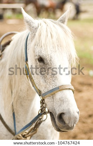 Grey Horse - stock photo