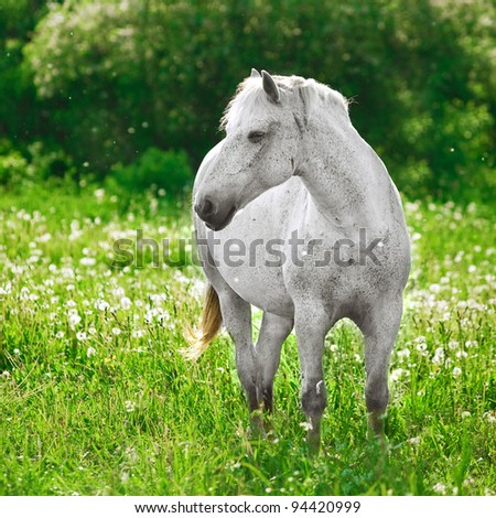 grey horse on field - stock photo