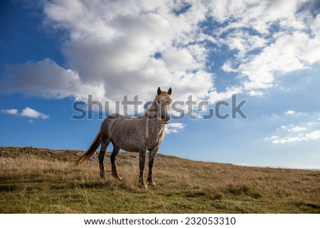 Grey Horse standing in a prairie with blue sky with white clouds background - stock photo