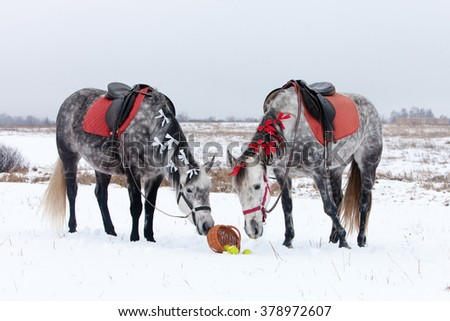 Grey horses on white snow