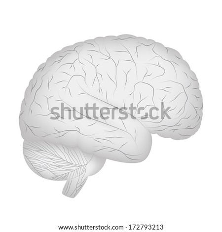 Grey human brain isolated on white background.
