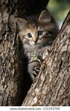 Grey kitten has some fun - stock photo