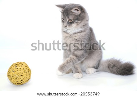 Grey kitten playing with yellow ball