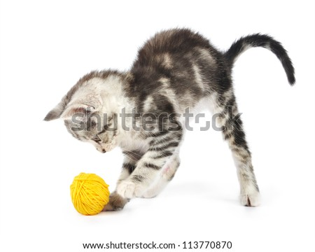 Grey kitten playing with yellow clew  isolated on white background - stock photo