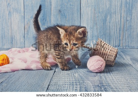 Grey kitten with pink wool ball and straw basket. Playful grey kitten. Sweet adorable kitten on a serenity blue wood background. Small cat. Funny kitten with copyspace - stock photo