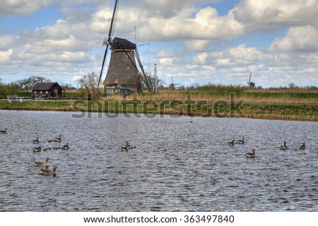 Grey-lag geese with goslings, Dutch windmill in background; Unesco World Heritage Site Kinderdijk, South Holland, Netherlands - stock photo