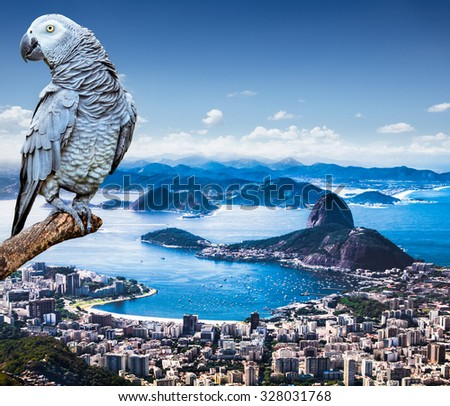 Grey Parrot and Panoramic view of Rio De Janeiro and Sugar Loaf, Brazil .