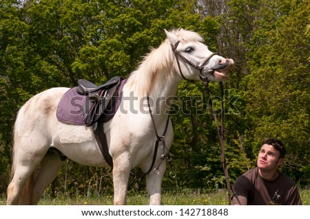 Grey pony appearing to laugh at something - stock photo