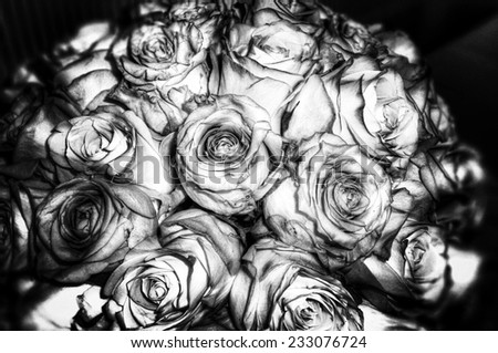 grey roses, condolences card background - stock photo