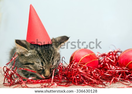 Grey small Christmas kitten sleeping on a flor with Christmas red decoration - stock photo