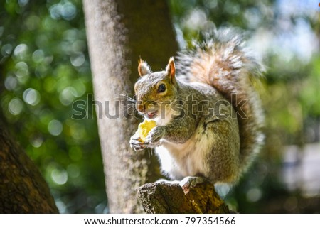 stock-photo-grey-squirrel-eating-chip-lo