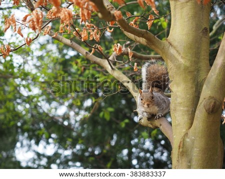 Grey squirrel on a brown tree in a park