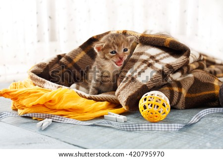 Grey striped newborn kitten in a plaid blanket. Sweet adorable tiny kittens on a serenity blue wood background play with cat toy and ribbon. Small cat. Funny kitten crawling and meowing - stock photo