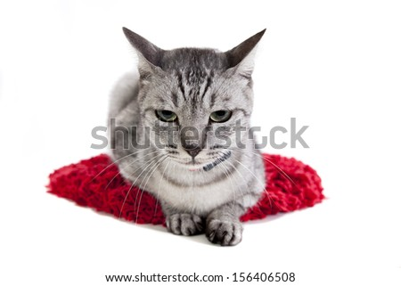 grey tabby cat isolated on a white background laying down on a red mat - stock photo