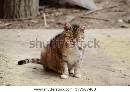 Grey tabby cat winks. Cat squints one eye. - stock photo