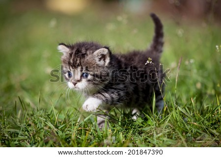 Grey tabby kitten on green grass - stock photo