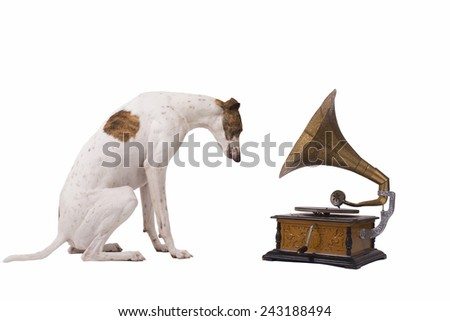 Greyhound and an old gramophone isolated on a white background - stock photo