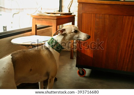 greyhound dog in the house with retro filter effect - stock photo