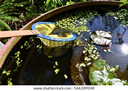 Grille cloth spoon scoop duckweeds in a water bowl with lotus plant