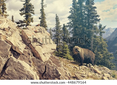 Grizzly bear in National park. Canadian Rocky Mountains forest landscape in the background. Chipmunk on the rock in the foreground. Banff, Alberta. Canada. Toned colors  - stock photo