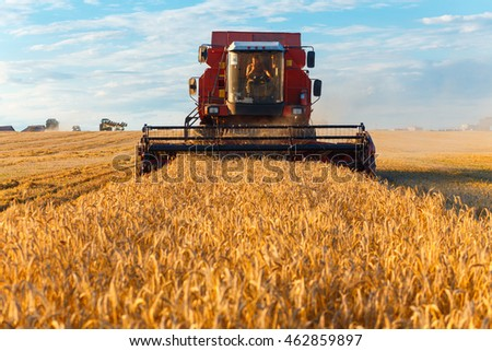 GRODNO, BELARUS - AUG 02: Combine harvester working on a wheat field near the living buildings on August 02, 2016 in Grodno, Belarus
