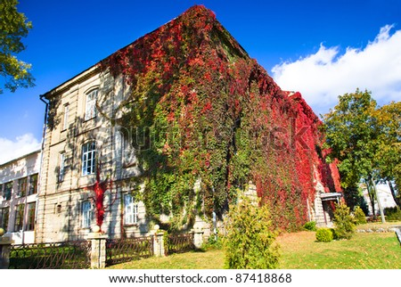 Grodno State University building, covered with ivy (in the autumn of the year) - stock photo