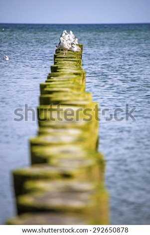 Groins in the Baltic Sea with gulls - stock photo