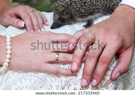 Groom and brides hands with rings and hedgehog in the background closeup - stock photo