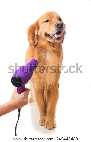 Groomer using blowdryer on a dog