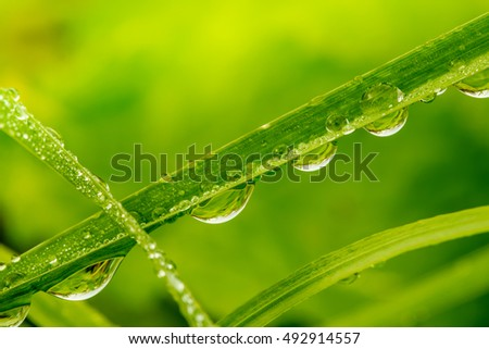 Grops of dew on grass close up