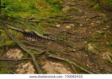 ground and roots of trees